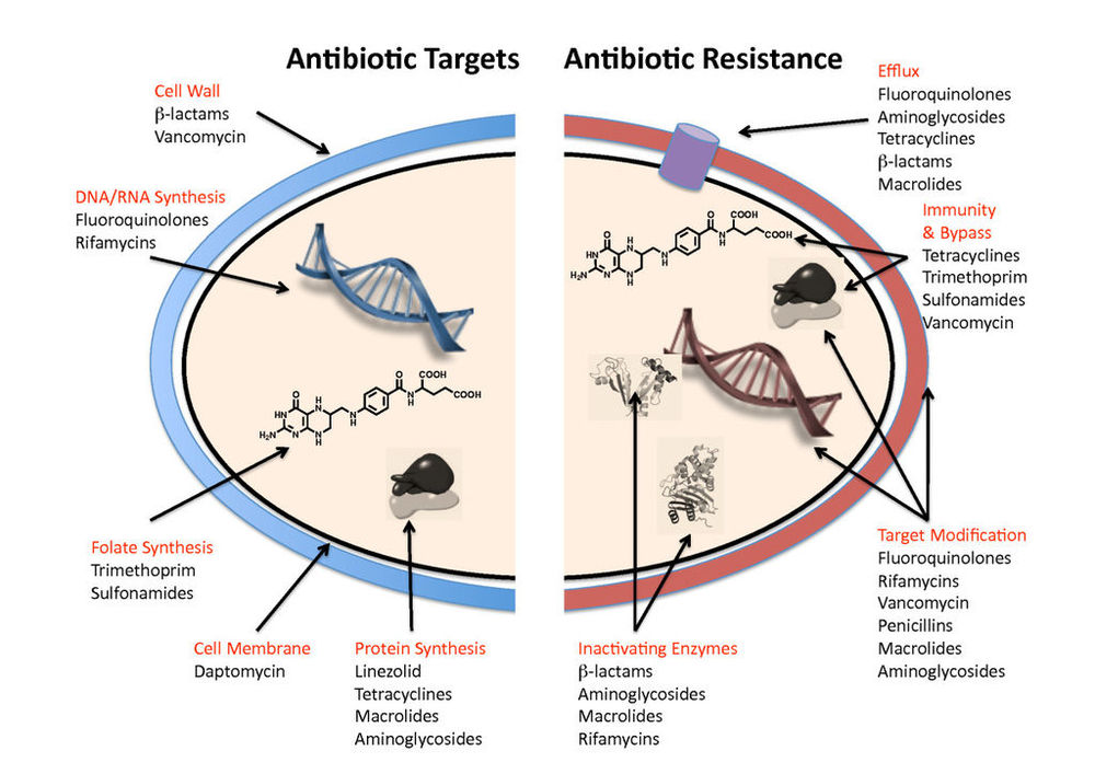 Antibiotic Resistance Mechanism