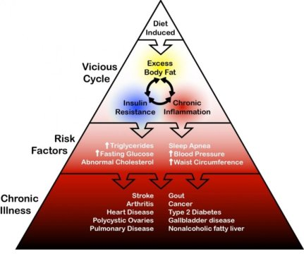 Obesity Triangle
